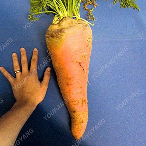 200pcs pourpre graines de carotte arc-en-Anti-âge ginseng bonsaï plantes en bonne santé sucre biologique semences potagères pour jardin Plum