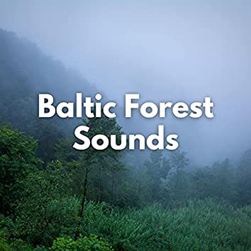Baltic Forest Sounds