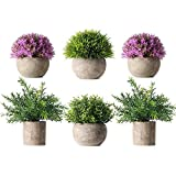 HC STAR Potted Artificial Pant Fake Green Grass with Pot Decorative Lifelike Set of 6 (High-Foot, Green-4 & Purple-2)