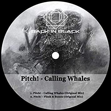 Calling Whales