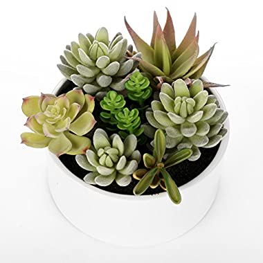 Decorative Round Faux Potted Succulents / Artificial Plant in 6 Inch Glazed White Ceramic Flower Pot