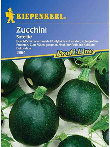 Zucchini Satelite rund grün