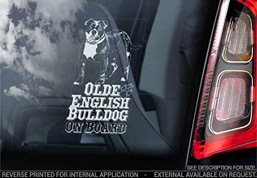 Sticker International Olde Englische Bulldogge - Autoaufkleber - Hund Schild Fenster, Stoßstange Aufkleber Geschenk - V002 - Weiß/Klar - Externe Außen...