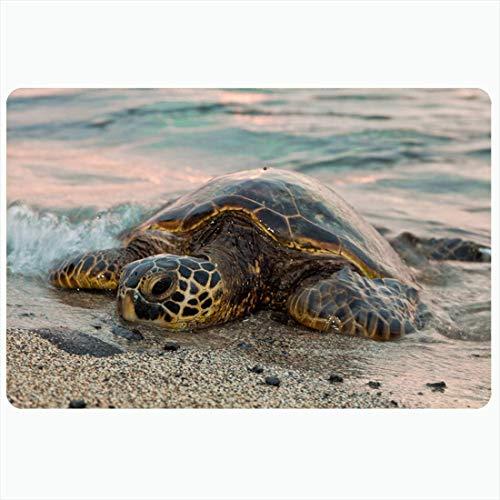 Alfombra de baño Beach Turtle Him Descansa ONT He Sands Animales Vida silvestre Transporte Puesta de sol Lindo océano en peligro de extinción Alfombras decorativas de felpa para baño Alfombras Decorac