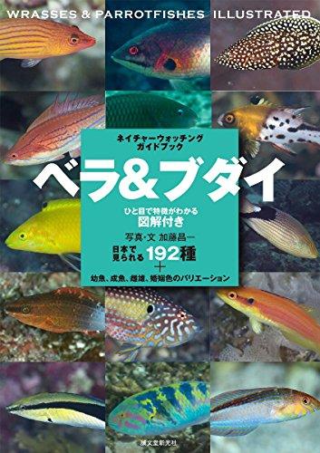 ベラ&ブダイ: 日本で見られる192種+幼魚、成魚、雌雄、婚姻色のバリエーション (ネイチャーウォッチングガ...