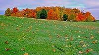 風景パズル1000ピース木製パズル多色落葉草教育知識人