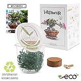 GROW2GO Kakteen Starter Kit Anzuchtset - Pflanzset aus Mini-Gewächshaus, Kaktus Samen & Erde - nachhaltige Geschenkidee für Pflanzenfreunde (Wüstenrose)