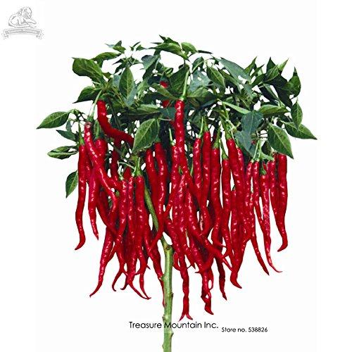 Graines importées Thai Eugonic Red Line Chili Pepper, paquet Al, 200 graines, Hot résistant aux maladies