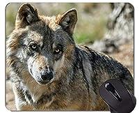滑り止めラバーゲーミングマウスパッド、冬狼動物パーソナライズされた四角形ゲーミングマウスパッド