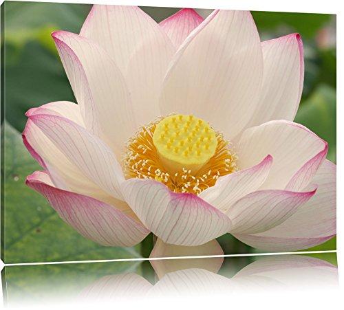 zarte rosafarbene Bachblüte Leinwand, XXL riesige Bilder fertig gerahmt mit Keilrahmen, Kunstdruck auf Wandbild mit Rahmen, günstiger als Gemälde oder Ölbild, kein Poster oder Plakat Format: 120x80 cm
