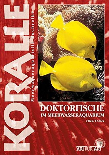 Doktorfische im Meerwasseraquarium (Art für Art)