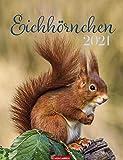 Eichhörnchen - Kalender 2021 - Weingarten-Verlag - Wandkalender mit bezaubernden Aufnahmen und Platz zum Eintragen - 29,8 cm x 38,8 cm
