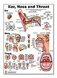 Blue Tree Publishing Ear Nose Throat Anatomy Poster 12x17inch, Otolaryngology-Waterproof