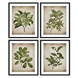 Bestbuddy Pet Set of 4 (8X10) Unframed Popular Old Fashioned Plant Botanical Prints Antique Heirloom Herb Art Prints Kitchen Wall Decor BBPAP015