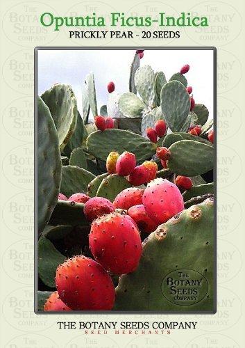Opuntia Ficus-Indica (20) Saatgut - Kaktusfeige Samen [Prickly Pear ]