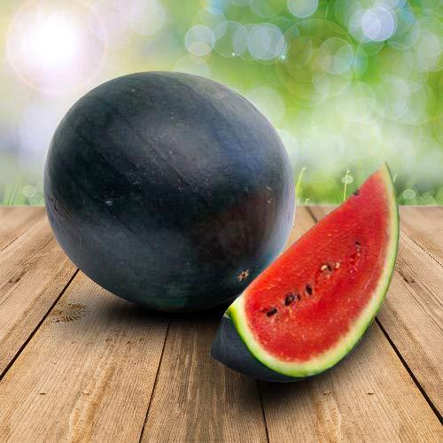 Wassermelon Sugar Baby 25 x Samen - 100% Natursamen, Superfruchtig und Herrlich Erfrischend