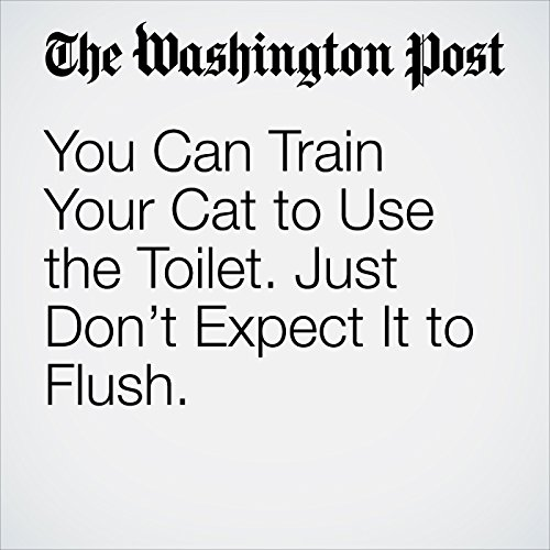 You Can Train Your Cat to Use the Toilet. Just Don't Expect It to Flush. copertina