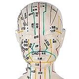 HZWDD Modello di insegnamento Modello di agopuntura - 50 cm Modello di agopuntura Femminile Punti meridiani Umani Agopuntura Medicina Cinese - per la Scienza Medica Agopuntura educativa Corpo uman