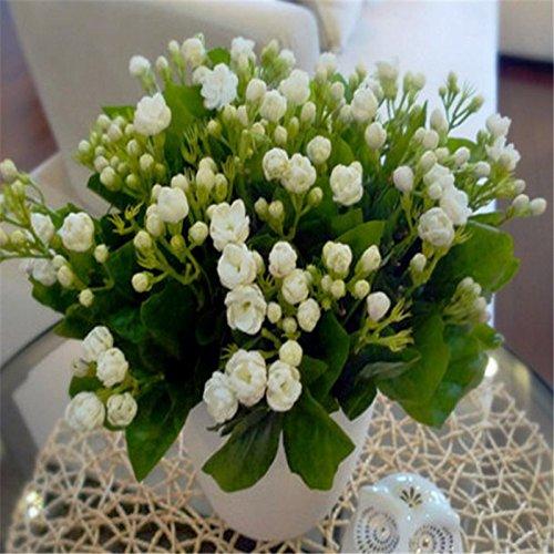 10seeds semillas de flores en macetas semillas de jazmín fragante Balcón Bonsai planta para casas y jardines de fácil cultivo