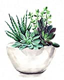 "Paint by Numbers for Adults, DIY Painting Kit for Beginners, 16"" x 20"" Succulent Pot Acrylic Painting is Suitable for Living Room, Bedroom and Decoration Gift"