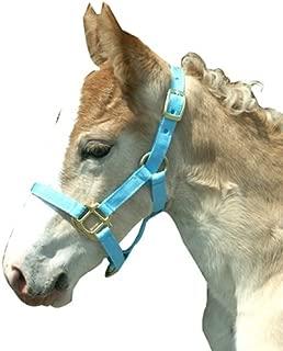 Best pink halter horse Reviews