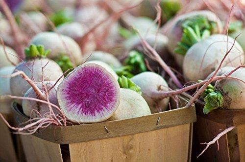 Nouveau WATERMELON RADISH Beauté Coeur Raphanus sativus Rose Blanc légumes Graines 300+