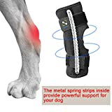 COODEO Powerful Dog Canine Rear Leg Hock Joint Brace with Metal Spring Strips, Strengthen Support Dog Back Leg Compression Wrap, Help Dogs with Injuries, Sprains, Arthritis, Rheumatism Walk (Middle)
