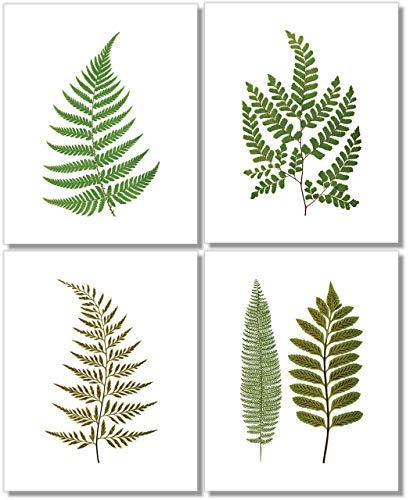 Fern Wall Art (Set of 4) - 8x10 - Unframed - Botanical Prints - Green Decor