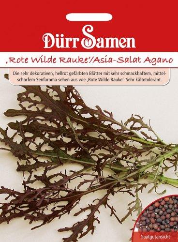 Salatsamen - Rote Wilde Rauke / Asia-Salat Agano von Dürr-Samen