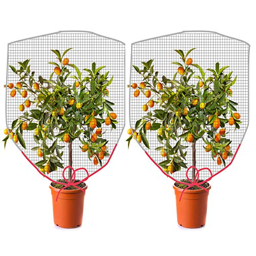MOLPE Insect Bird Barrier Netting Mesh with Drawstring, Large Garden Bug Netting Plant Cover for Plant Fruits Protection. (55''x 41'', 2 PCS)