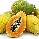 15 Semillas De Papaya Semillas De árboles Frutales No Transgénicos Para La Plantación De Jardines Durante Mucho Tiempo Por Parte De Los Clientes Cuidado Fácil Favorito Trae Una Sensación De Logro