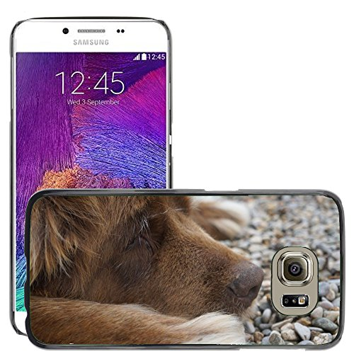 Just Cover Hot Style Cell Phone PC Hard Case cover//M00139864Cane Animal Terranova Cioccolato//Samsung Galaxy S6(Not Fits S6Edge)