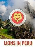 Lions In Peru