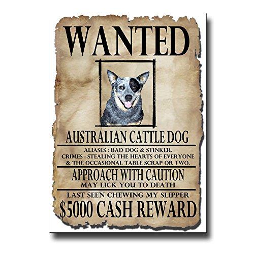 Australian Cattle Dog Wanted Fridge Magnet Funny
