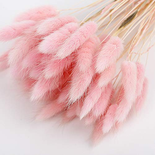 BRXY 50PCS Home Decoration Lagurus Ovatus Rabbit Tail Dried Flowers, Real Flower, Eternal Flower Dried Grass,Flower Bouquet, Photo Props Home Party and Wedding Decor (Pink)