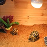 Eco Mat For Reptile