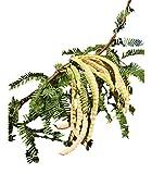 Organic Mesquite Powder (Flour) - 5 lb - Healthy Flour Alternative For Baking, Smoothies, & Recipes - All Natural Source Of Fiber & Minerals - Raw, Non GMO, Gluten Free, Vegan, & Kosher