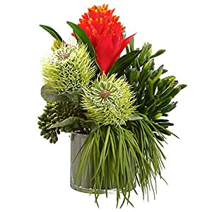"Silk Flower Arrangements SilksAreForever 12"" Hx11 W Artificial Bromeliad, Succulent & Grass Flower Arrangement w/Glass Vase -Red/Green"