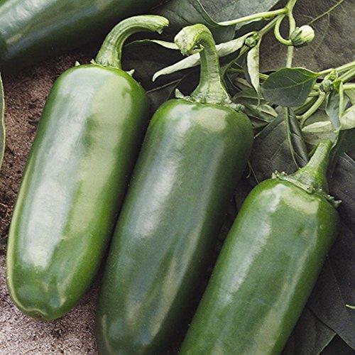 PLAT FIRM SEMILLAS DE GERMINACION: 50 - Semillas: Tajin F1 Hybrid Hot Pepper Seeds - Â¡Perfecto para salsa y decapado!