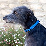 Bioflow Collar magnético para perro azul (pequeño (hasta 45 cm)