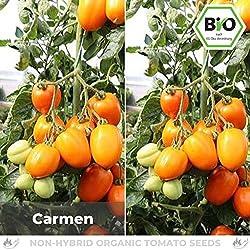 Pepperworld Carmen Bio Saucen-Tomate, 10 Korn, Tomaten-Saatgut zum Anpflanzen, fruchtig-süß