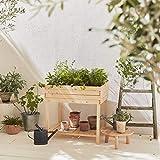 Alice's Garden Huerto Cuadrado de 80x60 pies, anémona - huerto de Abeto finlandés