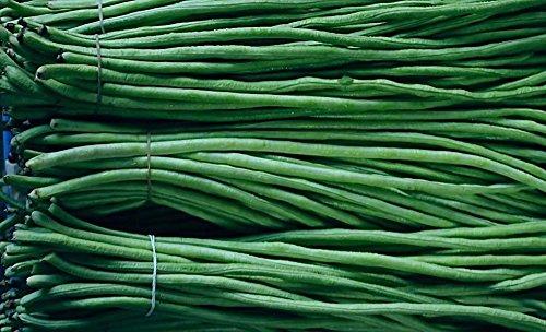 20 Korn / bag der chinesischen lange Bohnen Bohnen Samen, Schlangenbohnen Ernährung Gemüsesamen, Minigartenerbsensamen