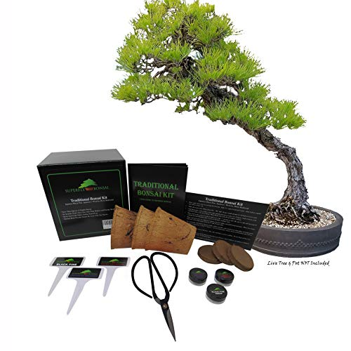 Traditional Bonsai Seed Growing Kit - Japanese Wisteria, Japanese Black Pine, Dawn Redwood (Level 1)