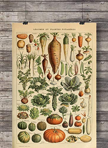 Poster Bild Gemüse Legumes Vintage A3 ohne Rahmen