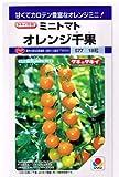 オレンジ千果  タキイ種苗のミニトマト種です