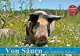 Von Säuen die Schwein haben! (Wandkalender 2020 DIN A3 quer): So glücklich sollten alle Schweine leben können (Geburtstagskalender, 14 Seiten ) (CALVENDO Tiere)