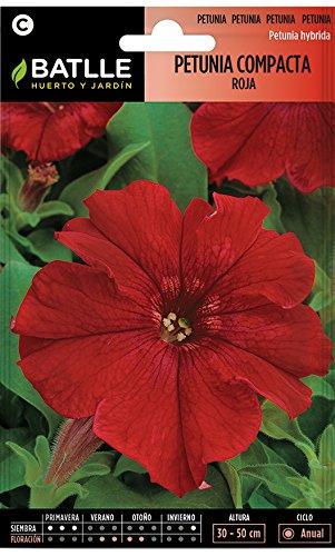 Semillas de Flores - Petunia Compacta rojo fuego - Batlle