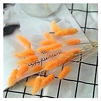造花 20枚ナチュラルドライフラワー白い人工の花 (Color : Orange)