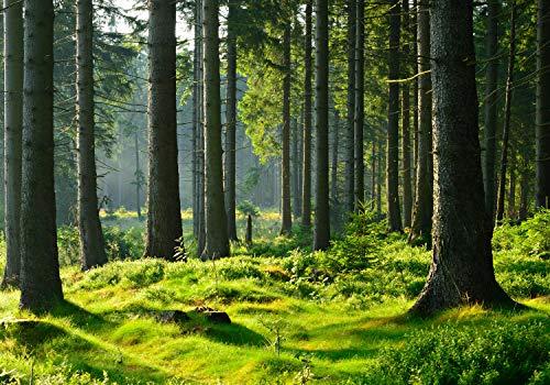 wandmotiv24 Fototapete Wald Stämme Wiese XXL 400 x 280 cm - 8 Teile Fototapeten, Wandbild, Motivtapeten, Vlies-Tapeten Grün, Stamm, Bäume M5674